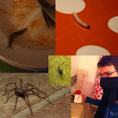 Slugs, spiders, caterpillars, mould and more. Not everything works well, especially the household...