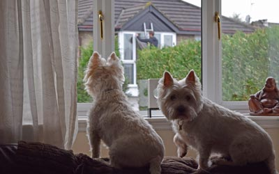 Charlie and Deno, observing the window cleaner on the other side of the street.